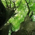 tree_6fqv